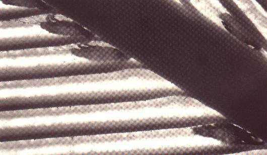 Schachtmijt 40x vergroot